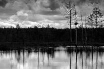 Estland Lahemaa National Park 1 von domi