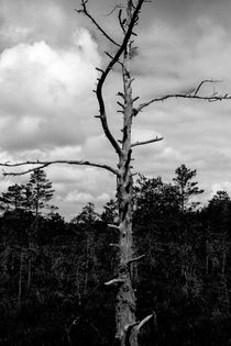 Lonesome Tree by domi