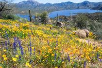 Blooming Arizona Desert von Jan Gundlach