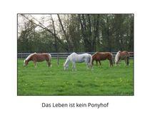 Ponyhof  by maja-310