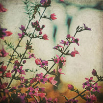 Memories of Spring von Karen Black
