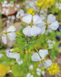 Zarte Blüten in Weis by Antje Krenz