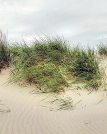 Grüne Düne bei Wind by Antje Krenz