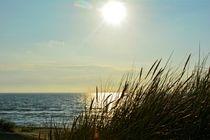 Strandhafer an der Nordsee beim Sonnenuntergang von Claudia Evans