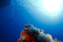 Ein Blick in die Unterwasserwelt von Sven Gruse
