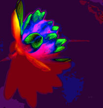 Water lily abstract pop art von Eti Reid
