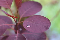 Leaf after a raining day by Maria Preibsch