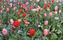 Tulip garden von Maria Preibsch