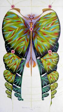 Fibonacci butterfly von federico cortese