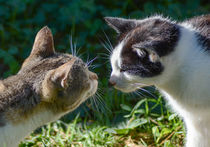 two cats by Thomas Preibsch