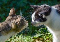 two cats von Thomas Preibsch