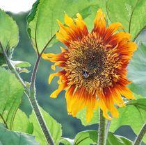 Sunflower von Thomas Preibsch