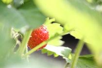 Erdbeer snack by Martina  Gsöls