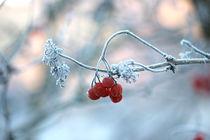 Fruits in Winter by Martina  Gsöls