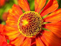 Florale Sonne. von Zarahzeta ®