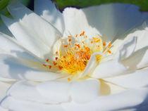 Florales Wirrwarr. von Zarahzeta ®