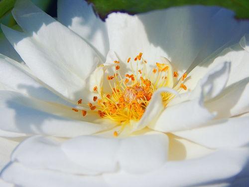 Florales-wirrwarr