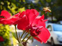 Stadtbiene. von Zarahzeta ®