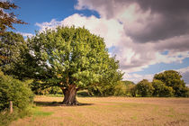 The big tree von Jeremy Sage