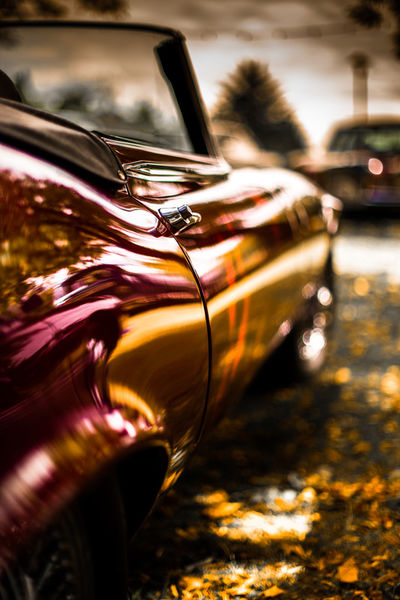 Jaguar-bunt-1-von-1