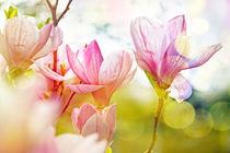 Frühling von Barbara Pfannstiel