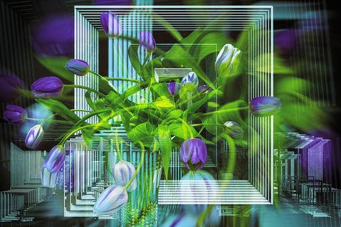 160730-0001-tulpen
