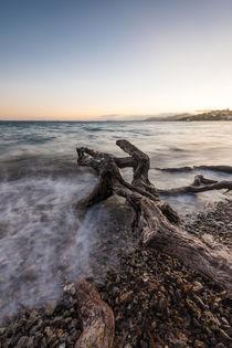 Baumstamm im Meer auf Mallorca von Florian Westermann