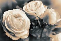 Rosen von Barbara Pfannstiel