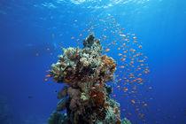 Korallenblock von Sven Gruse