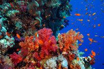 Das Riff von Sven Gruse