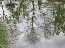 Reflections von Maria Preibsch