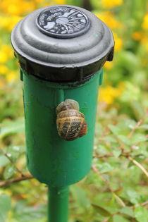 Snail by Maria Preibsch