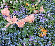 Garden by Maria Preibsch
