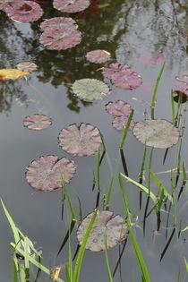 Water lilies von Maria Preibsch