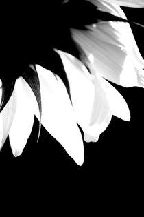 Licht durchflutet von Bastian  Kienitz