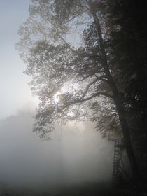 Morgens im Nebel by lassiekatze