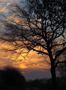 Sonnenuntergang by lassiekatze