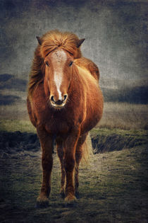 The horse von AD DESIGN Photo + PhotoArt