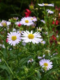Blumenwiese by maja-310