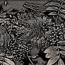 Abstract Autumn Berries In Black And White by gittag74