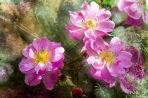 Rosenblüten mit Lavendel von Nicc Koch