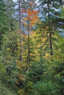 Herbst am Eibsee... 2 von loewenherz-artwork