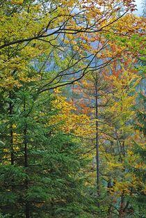 'Herbst am Eibsee... 1' by loewenherz-artwork