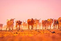 Dedobli - Kuh by Lena Wendt