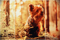 Little Dog in Nature by Sandra  Vollmann