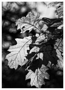 Blätterwerk von Peter Hebgen