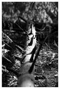 Unterholz von Peter Hebgen