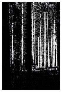 Schonung by Peter Hebgen