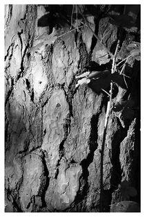Baumrinde von Peter Hebgen