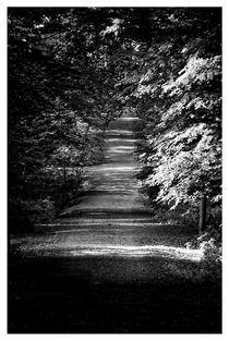 Waldweg von Peter Hebgen